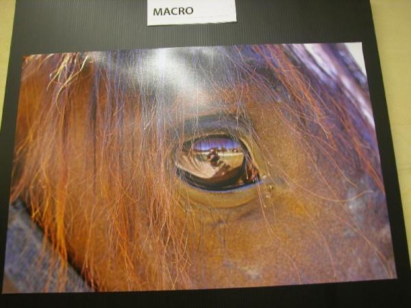 big_08_01_2008_cavallo